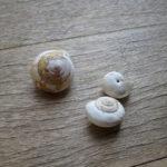 [画材考] 画家:江森郁美「蝸牛(かたつむり)の殻」